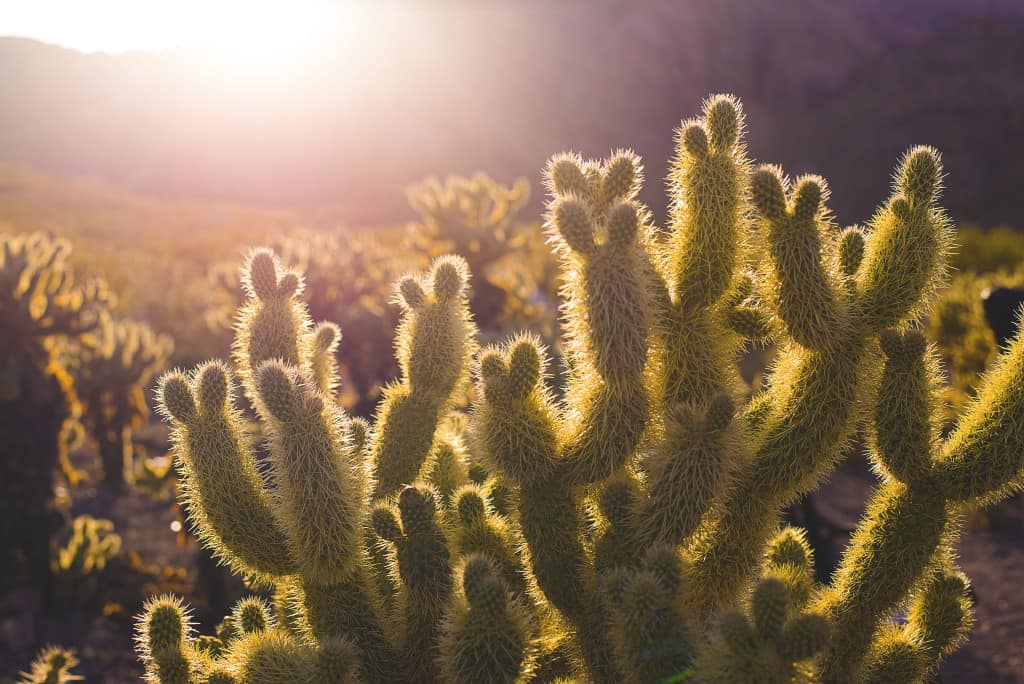 Cactus metaphor for breast cancer nerve disorders
